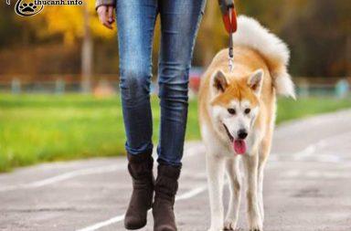dắt cho đi dạo