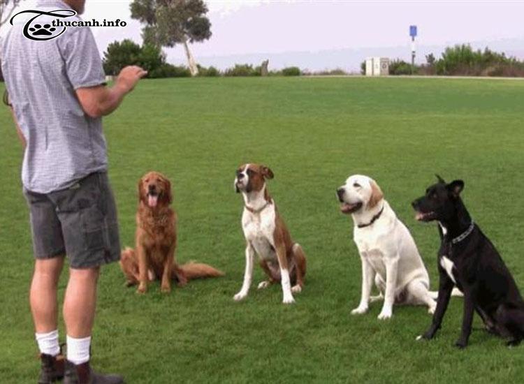 huấn luyện chó cơ bản