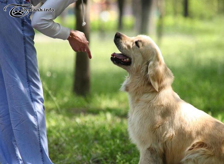 huấn luyện chó sủa theo lệnh
