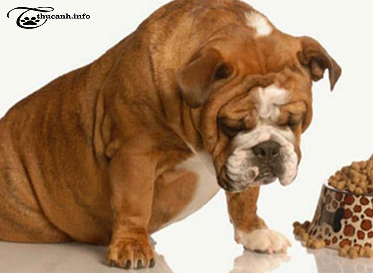Những loại thức ăn không nên cho cún